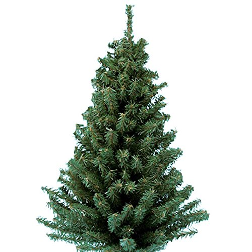 Centerpiece Green Christmas Mini (Kurt Adler 18-Inch Mini Pine Tree)