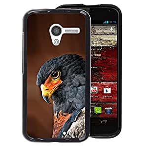A-type Arte & diseño plástico duro Fundas Cover Cubre Hard Case Cover para Motorola Moto X 1 1st GEN I (Hawk Bird Tropical Feather Brown Nature)