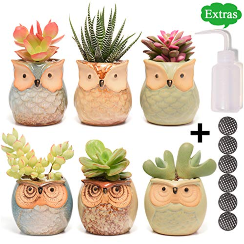 - Succulent Planter, Cute Ceramic Owl Planters with Potting Tools, 2.5 Inch Small Flower Pot, Set of 6 Pots for Plants - Plants Excluded