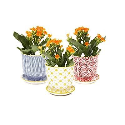 Chive - Liberte Succulent Planter Pot with Drainage Hole and Saucer, Porcelain Pot - 3 pcs Special Mix Pack