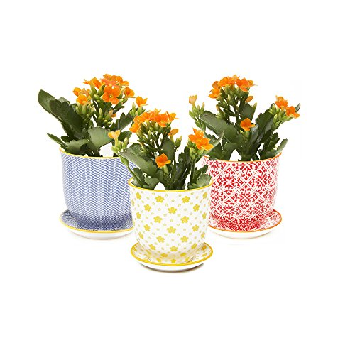 Chive - Liberte Succulent Planter Pot with Drainage Hole and Saucer, Porcelain (Saucer Yellow Flowers)