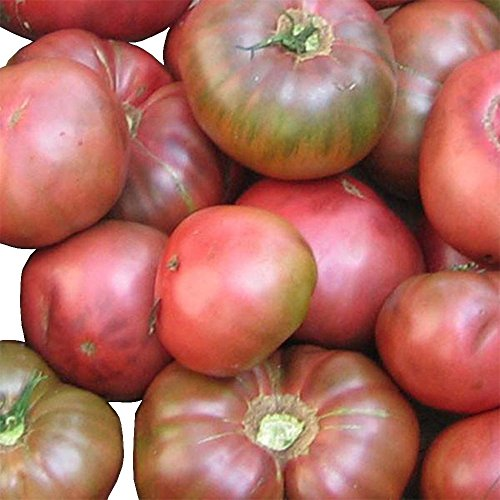 (Black Magic Tomato Seeds by Pepper Joe's - 20+ Tomato Seeds Per Pack)