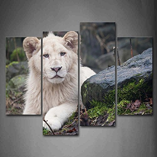 White Lion Lie On Floor With Rocks Wall Art Painting Pictures