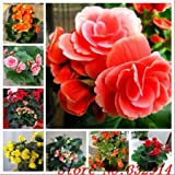 Hot Sale 2016 20 Colors Rare Begonia Seeds Flower Seeds 50pc/pack Bonsai Seeds for Home & Garden