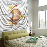 AngelSept Wall Tapestry Decorative Art Prints can be Hung on The Bedside of Dormitory,Educational,Human Eye Anatomy Cornea Iris Pupils Optic Nerves Graphic Print Decorative,Coral Mustard Baby Blue