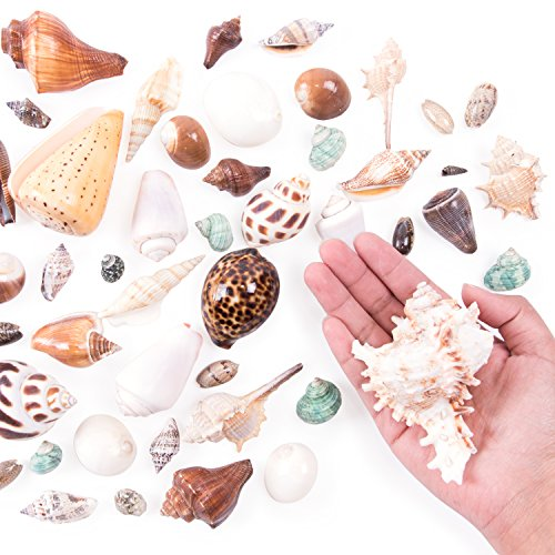 Mixed Ocean Beach Fairy Garden Seashells Marine Life for Arts & Crafts, Decorations, Party Favors Collection (Approx. 40 Pieces)