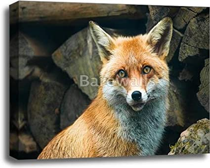 Red Fox Gallery Wrapped Canvas Art Bwc1980980 20in X 24in