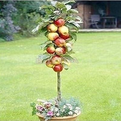 PAY Mysterious Gift 20pcs Per Bag Bonsai Apple Tree Seeds Fruit Garden Plants