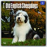 Old English Sheepdogs 2017 Square (Multilingual Edition)