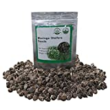 100 Moringa also known as drumstick tree Moringa Organic Seeds ~Chris's garden