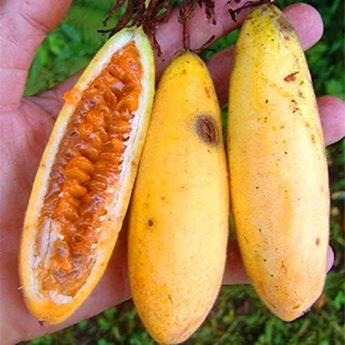 DaDago 50 Unids/Pack Semillas De Fruta De La Pasión De Plátano ...