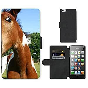 Super Stella Cell Phone Card Slot PU Leather Wallet Case // M00146495 Foal Horse Pasture Animal Nature // Apple iPhone 5 5S 5G