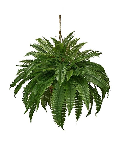 Artificial Double Boston Fern Hanging Basket Extra Full Arrangement Silk Plants by Black Decor Home