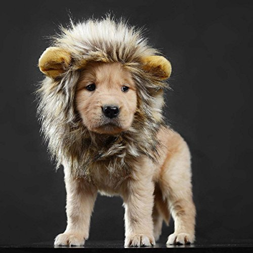 lcfun Lion Mane Costume for Cat Puppy - Pet Wig with Ears, Cat Clothes for Halloween Party -