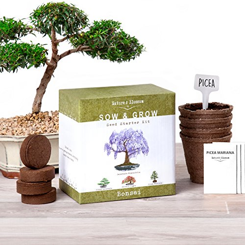Nature's Blossom Bonsai Tree kit - Grow 4 Bonsai Trees From Seed. Complete Set with Organic Soil, Biodegradable Pots, Plant Labels & Detailed Instructions. Garden Gift for Men and Women.