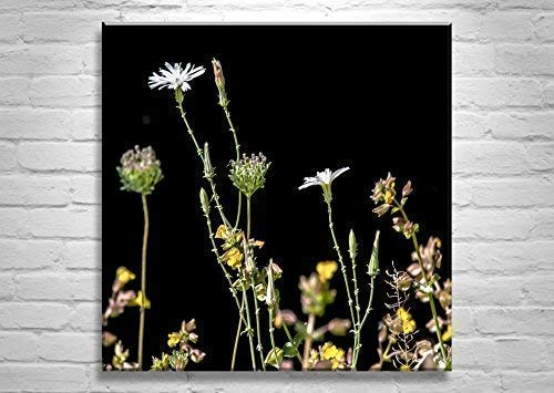 Wildflower Art Print, Murray Bolesta Nature Photography