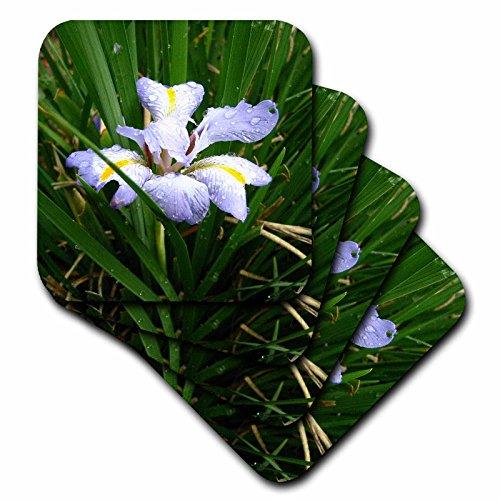3dRose cst_3138_3 Iris Ceramic Tile Coasters, Set of 4