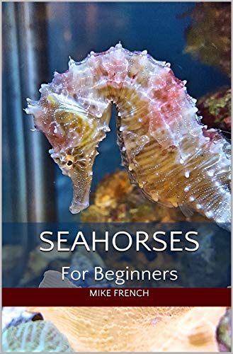 Seahorses For Beginners ()