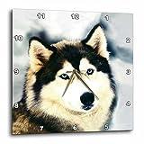 3dRose Dogs Siberian Husky – Staring Siberian Husky – 15×15 Wall Clock (dpp_517_3) Review