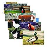 Stages Learning Farm Animal Posters Real Photo Classroom Decorations for Preschool Bulletin Boards & Circle Time 10 Large Picture Cards
