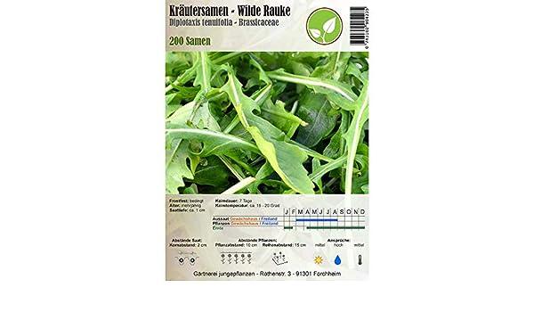 Semillas de hierbas - Salvaje rúcula - Diplotaxis tenuifolia - Brassicaceae 200 semillas: Amazon.es: Jardín