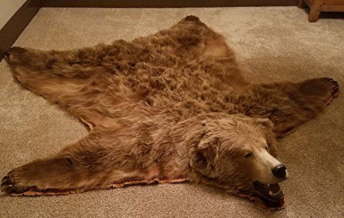 grizzly bear rug - 4