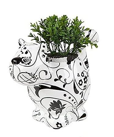 Amazon.com: Francés Decorativ gato caché maceta para hierbas ...