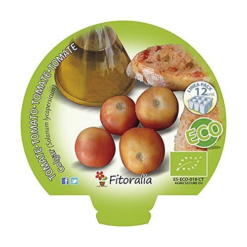 Plantel de tomate de colgar ecológico (12 unidades): Amazon.es: Jardín