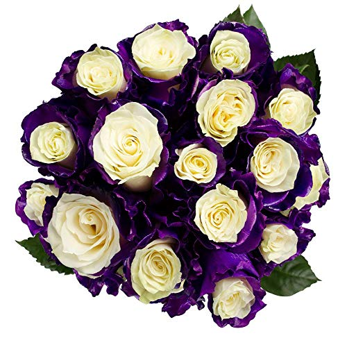 FRESH Tinted Roses|White and Purple| 25 stems (Comet Rose) Magnaflor - XXL Blooms| Bunch| 10-12 days vase Life by Magnaflor - Wholesale Roses & More