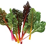 Chard Seeds - Rainbow Swiss Mix - Heirloom Non GMO Seeds