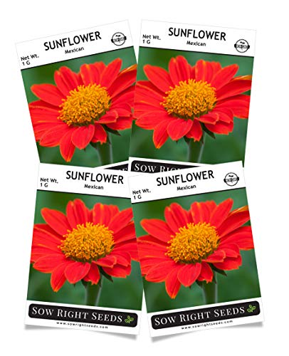 Sow Right Seeds - Mexican Sunflower Seed for Planting- Full Packet with Instructions, Beautiful Non-GMO Heirloom Flower to Plant, Wonderful Gardening Gift (4 Packets)
