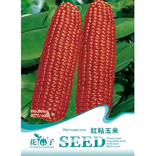 red-waxy-corn-seeds-novelty-vegetable-seed-10pcs
