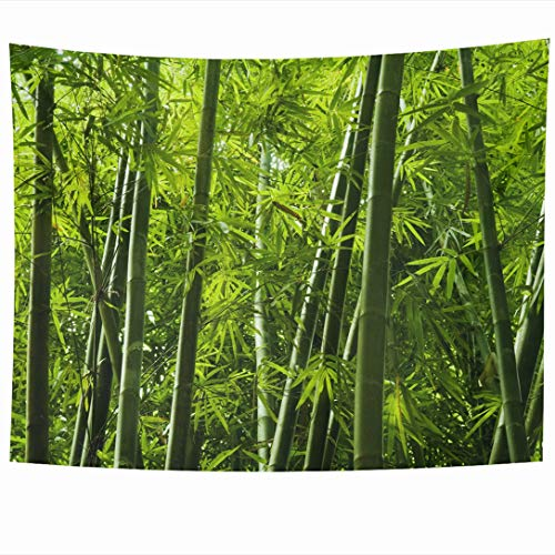 Ahawoso Tapestry 90 x 60 Inches Abstract Green Forest Lanscape Bamboo Tree Tropical Rainforest Malaysia Nature Parks Asian Garden Wall Hanging Home Decor Tapestries for Living Room Bedroom Dorm
