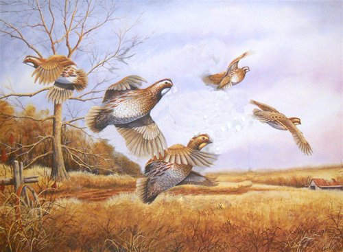 Allen Hughes - Quail Unlimited 15th Anniversary Edition 1996-1997 Quail Includes Mint Stamp