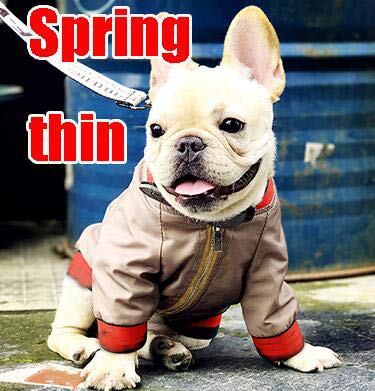 Dog Coats Autumn Winter S-XXL FB Puppy Coat Dog Baseball Jacket Pet Clothes Dogs Clothing Pets Parka Warm Jackets Dog Apparel