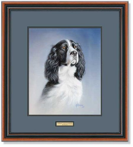 Springer Spaniel Framed Print by Jim Killen