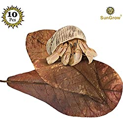 SunGrow Hermit Crab Leaves, 10-inches Long, Dried Leaves for Added Humidity, Delicious Crab Treat and Source of Cellulose, 10-Pieces