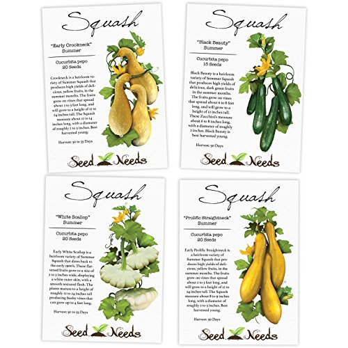Collection of 4 Individual Summer Squash Seed Packets (Cucurbita pepo) Non-GMO Seeds By Seed Needs