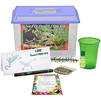 Live Dwarf Frog Kit with Free Certificate to Redeem for 2 Aquatic Dwarf Frogs