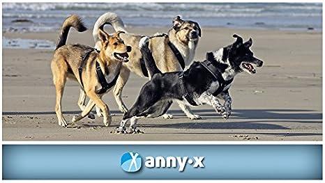 annyx Pecho Vajilla FUN L color por favor por email: Amazon.es ...