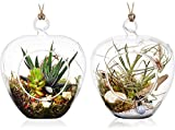 5″ Hanging Terrarium / Glass Container for Succulent Air Plant Tillandsia – Set of 2 by Stenira Glass For Sale