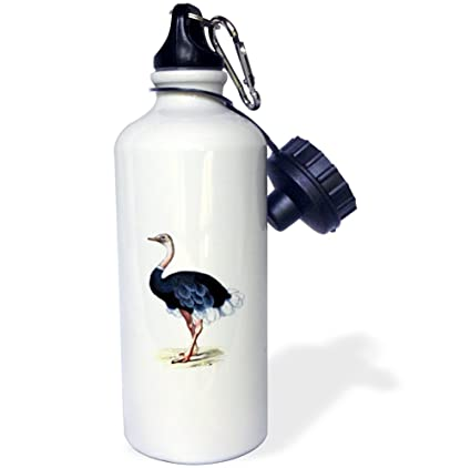 White 21 oz 3dRose wb/_41561/_1Vintage Ostrich Image Sports Water Bottle