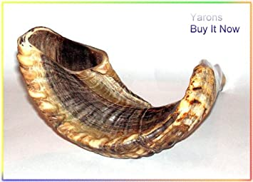 New Kosher 20 Rams Horn Shofar Authentic Natural From Israel