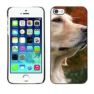 Print Motif Coque de protection Case Cover // M00312975 Otoño rieles amarillas Avar Rail // Samsung Galaxy S5 S V SV i9600 (Not Fits S5 ACTIVE)