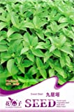 Basil Seed 30 Edible Herb Plant Sweet Green Popular Healthy Natural D008 By Mikedaoer