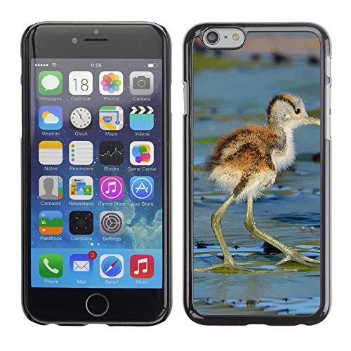 "Premio Sottile Slim Cassa Custodia Case Cover Shell // F00012116 petit oiseau // Apple iPhone 6 6S 6G PLUS 5.5"""