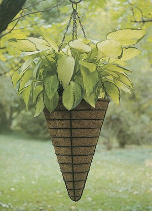 Kinsman 12'' CONICAL Hanging Basket Liner (Liner Only) Set of 5