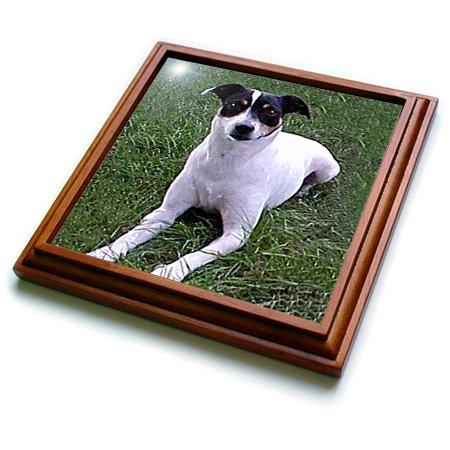 3dRose trv_791_1 Rat Terrier Trivet with Ceramic Tile, 8 by 8