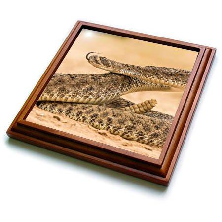 3dRose Danita Delimont - Snakes - Texas, Hidalgo Co., Western diamondback rattlesnake coiled to strike. - 8x8 Trivet with 6x6 ceramic tile (trv_260096_1)