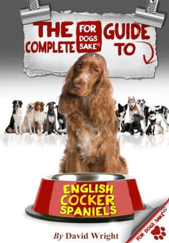 English Cocker Spaniel Rescue - 2